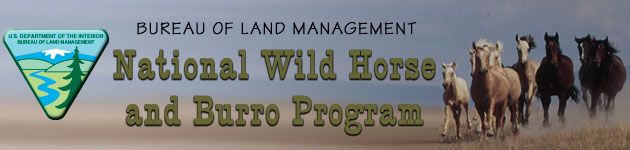 The Bureau of Land Management Wild Horse and Burro Program