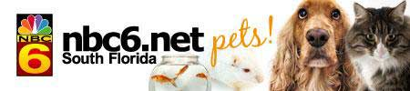 NBC Pet Pals South Florida