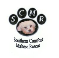 Southern Comfort Maltese Rescue