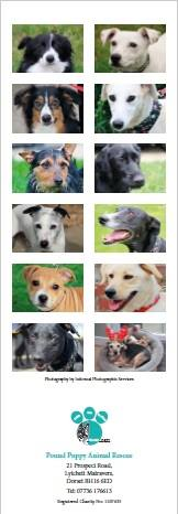 Poole Pound Dog Rescue